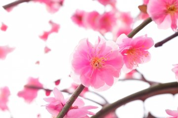 <p>정(亭)은 매화의 달콤한 향기로 가득하다.</p>