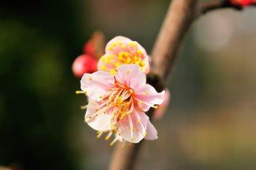 <p>아름다운 꽃</p>