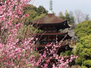 The grounds around the pagoda are free to walk around