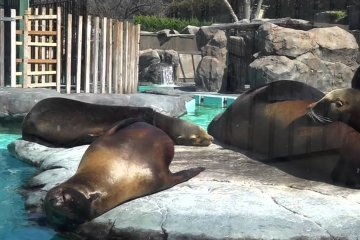 우에노 동물원 4탄 – 멋진 육식동물들