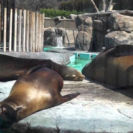 上野動物園 -4 イケメンの肉食獣