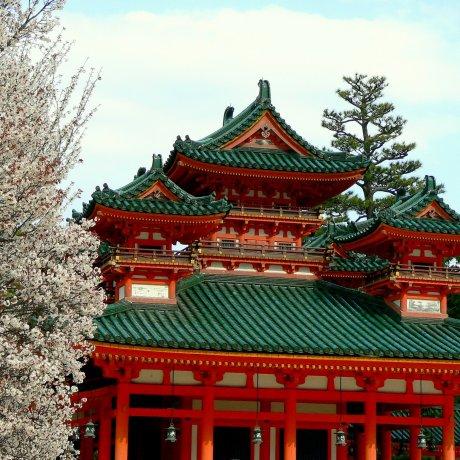 Cherry Blossom at Heian Jingu