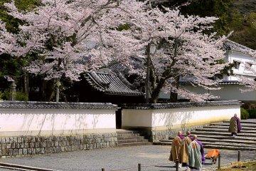 Doa dan Sakura