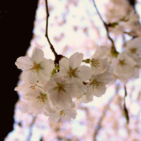 Hoa nở dọc theo con đường triết học
