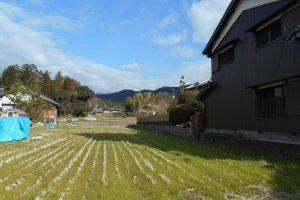 La campagne d'Asuka