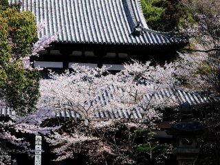 根来寺でもっとも中心的な堂宇。僧が厳しい修行を行うところである