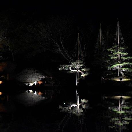 Jardim Yokokan Iluminado em Fukui