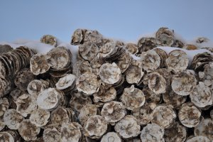 Preparations for an upcoming oyster season.