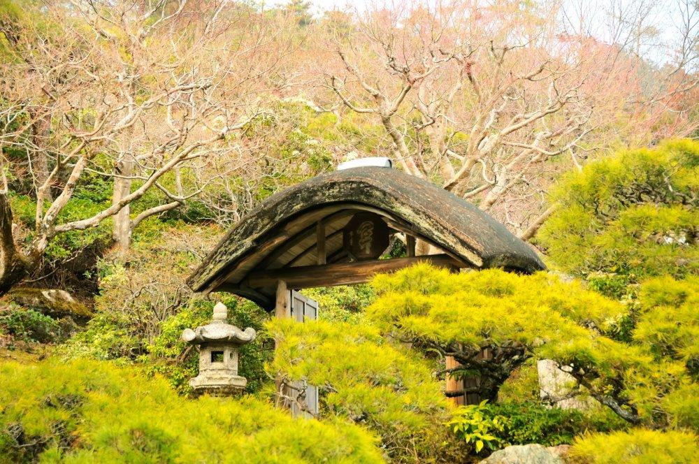 まだまだ木々に葉は無いが、松葉は鮮やかな緑が目立ち始めた