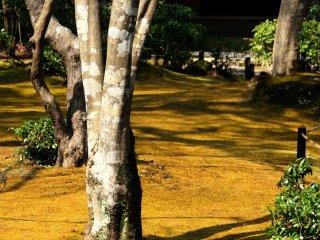 黄色の絨毯を感じさせる芝生の上に彼方此方、陽光が射している