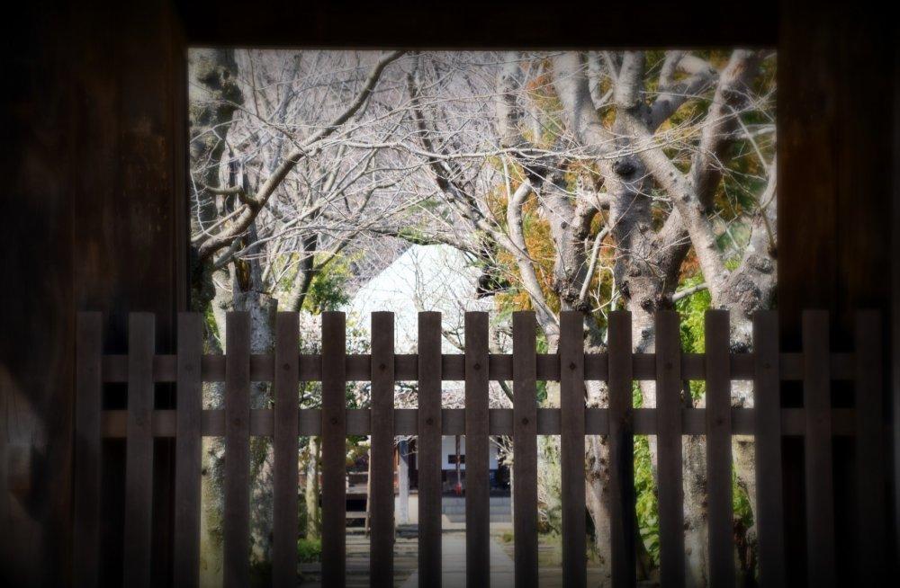 나무 문을 통해 고쿠라쿠지 사찰의 대청을 바라보며