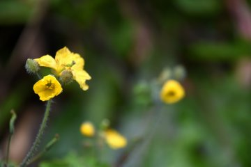 하지만 자세히 들여다보니 이 예쁜 꽃들을 발견했어! 봄이 정말 오고 있어!
