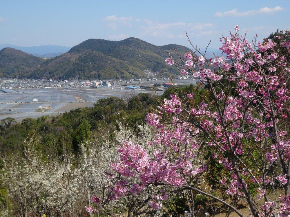 Một góc nhìn từ khu vực hoa anh đào của khu vườn