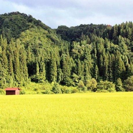 50 Nuances de Vert à Yamagata