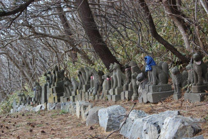 이 돌여우들은 일본 각지에서 왔다고 한다. 그들이 피해를 입었거나 나이가 들었을 때, 그들은 이 사원에 안치된다.
