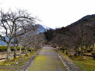 공원 안에 벚나무가 줄지어 있는 통로. 그들은 벚꽃이 만개한 4월에 매우 아름다워 보일 것이다