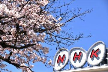 <p>NHK Fukui branch building and cherry blossoms</p>