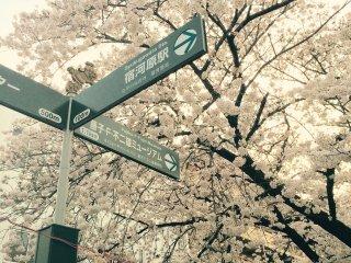Um sinal indica que o Museu Doraemon fica próximo