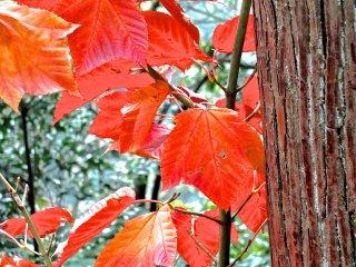 Осенние листья вдоль тропинки