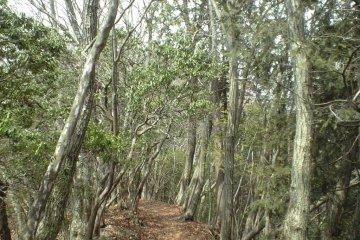 Path along the Ridge