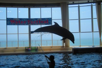 One of the dolphins doing a high jump for a trainer