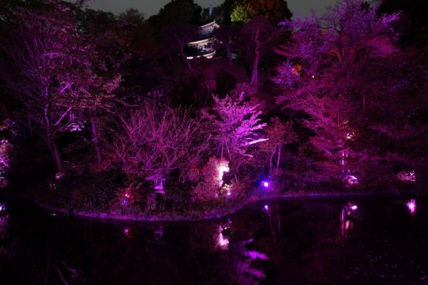 The traditional garden of Hotel Chinzanso is lit up in pink for cherry blossom season