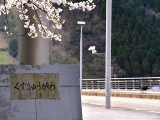 สะพานคัตซึตยะมะกับดอกซากุระ ในป้ายเขียนไว้ว่า แม่น้ำคุสุริว