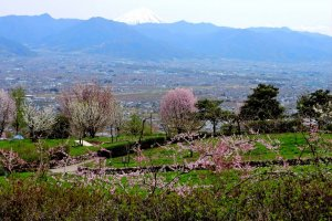 View over the park to Mount Fuji