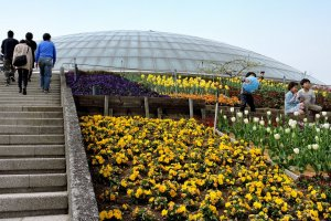 The steps to the largest dome were flanked with spring flowers