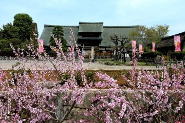 <p>Kanzo Yashiki with peach blossom in the foreground</p>