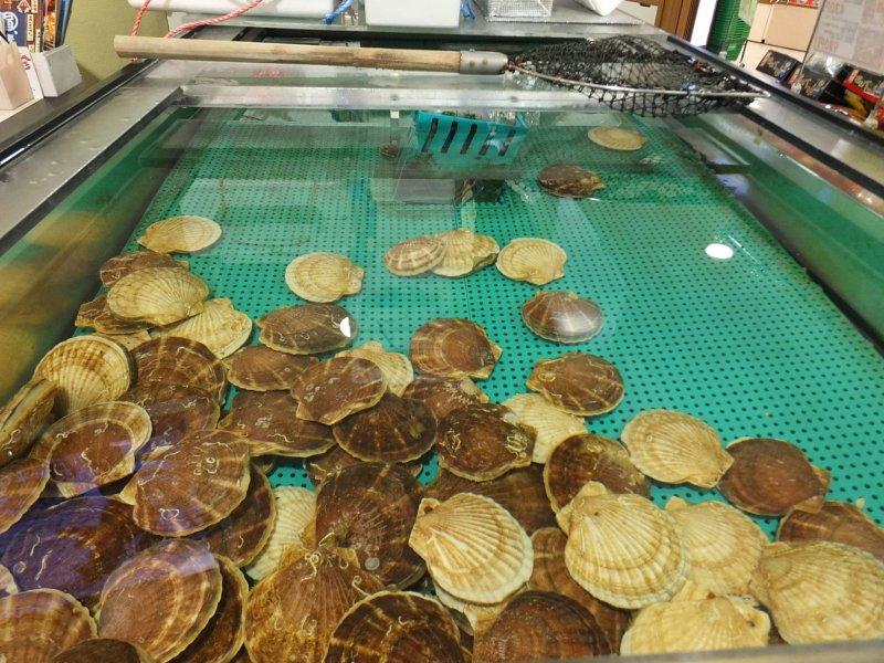 <p>หอยเชลล์ในบ่อใหญ่ใจกลางร้าน อาโอโมริโฮตาเตะโกยะ พร้อมรอให้คุณมาตก</p>