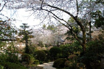 Ryotanji grounds in spring