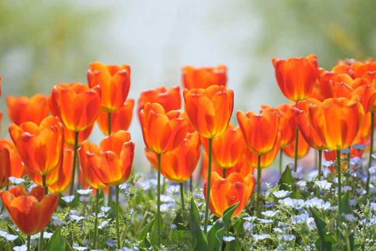Hân hoan chào đón ánh nắng xuân