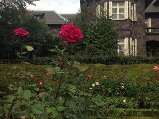Прекрасные бордовые розы