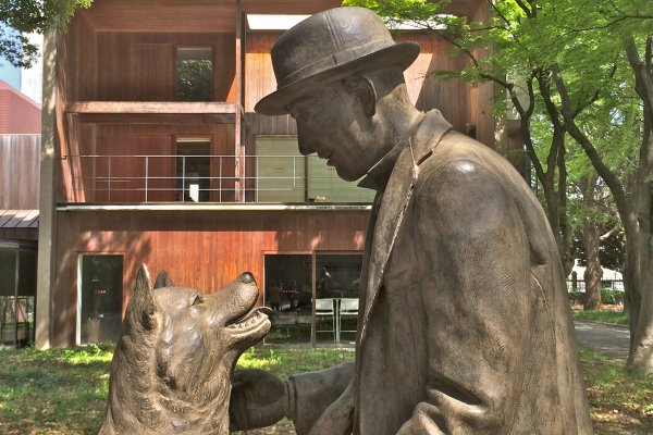 The legendary loyal Akita is finally reunited with his Master, ProfessorHidesaburo Ueno,at the Department of Agriculture inside the University of Tokyo. Unveiled March 9, 2015.