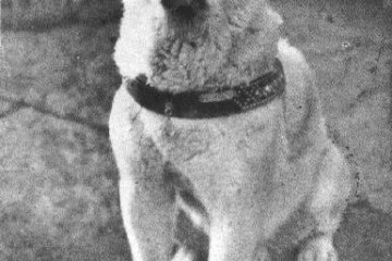 <p>One of the last few photos taken of the beloved Japanese Akita named&nbsp;Hachiko</p>