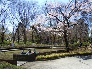 Improvisez un pique-nique sous un cerisier au central park de Shinjuku