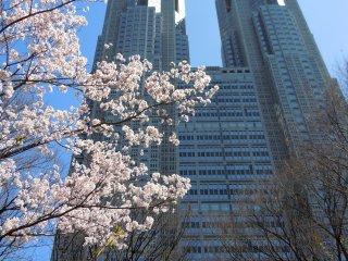 Au coeur de la plus grande ville du monde, le printemps se pare de ses plus belles fleurs