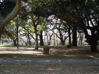 A quelques pas de la frénétique avenue Omotesandô, un coin de quiétude dans le parc de Yoyogi