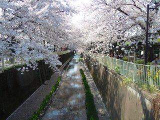 Suivez le chemin qui longe la rivière Kandagawa en direction de Takaido