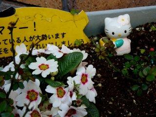 Hello Kitty-садовод