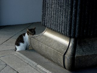Кошка смотрит на случайно забредших посетителей