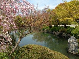 Когда я посетила храм, там еще не отцвела плакучая сакура