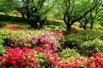 日輪寺つつじ公園