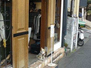 Собачка ждет своего хозяина у входа в магазин, а он не торопится выходить