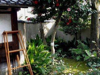 Видимо, садовники покрасили лишь половину роз и забросили стремянку