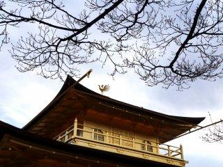 킨카쿠지를 더 화려하게 장식하는 지붕 위의 봉황새