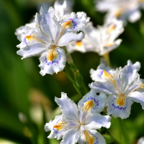 니시야마공원의 봄꽃