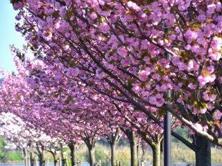 이렇게 아름다운 꽃으로 둘러싸인 공원에서 긴장을 푸는 것은 정말 환상적이야!