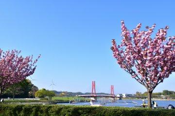 푸른 호수, 풍차, 벚꽃의 붉은 아이리스 다리의 멋진 풍경. 얼마나 상쾌한 광경인가!